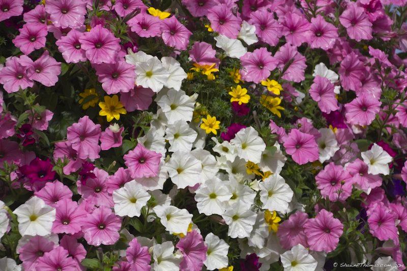 Niagara Parks Flowers