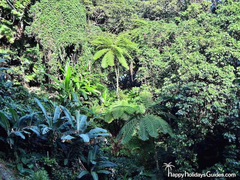 El Yunque Green Canopy