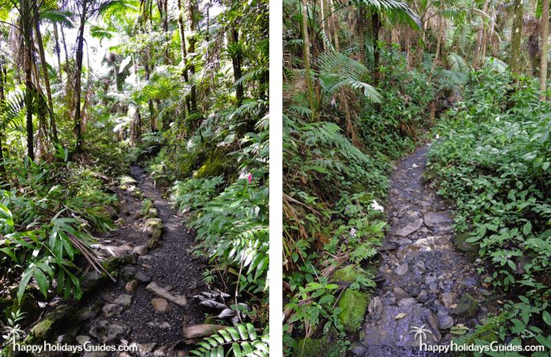 El Yunque hiking paths