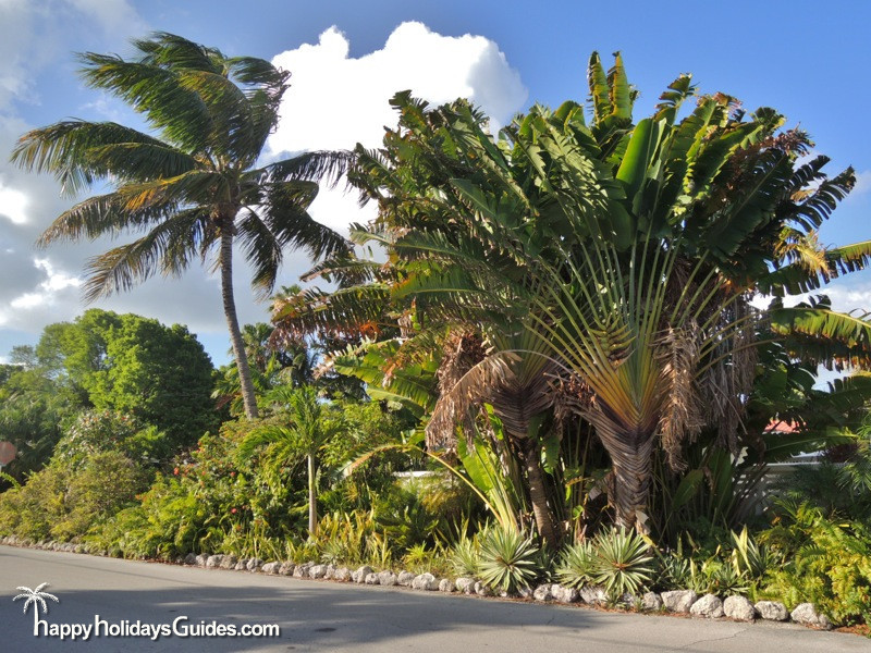 Key West Classic Palms