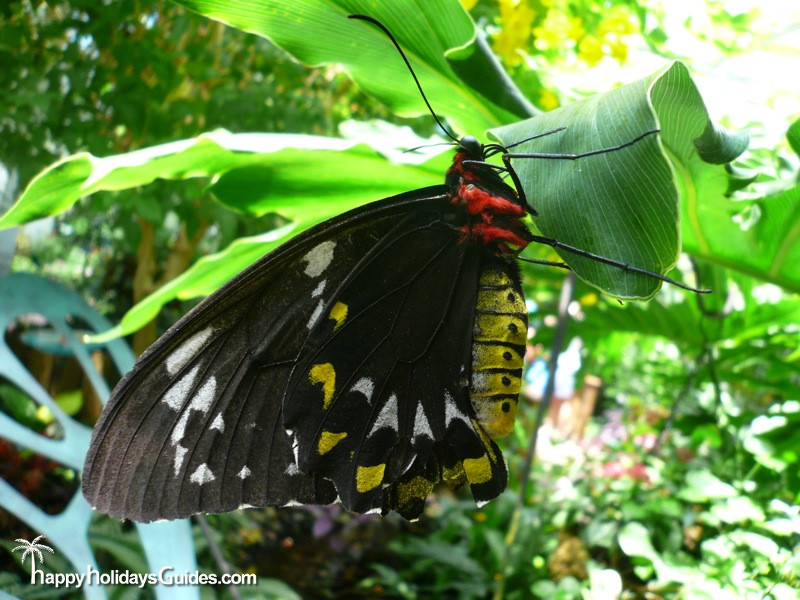 Butterfly Conservatory Black and Yellow Butterfly