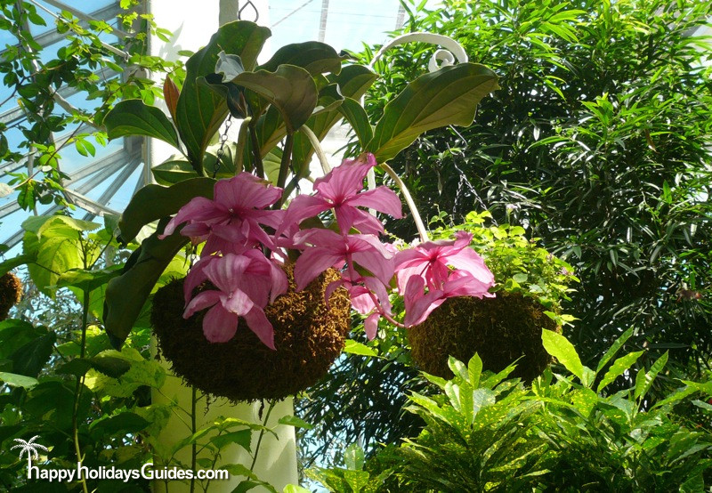 Butterfly Conservatory Pink Flowers