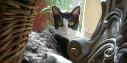 Maisey the Cat Horizontal