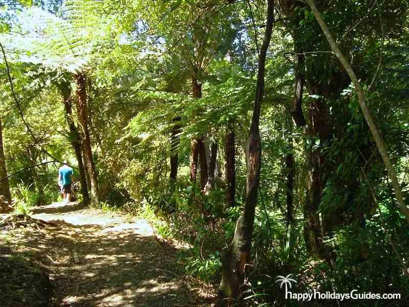 Auckland Waitekere Trail