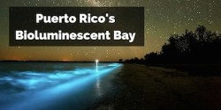 Puerto Rico Bioluminescent Bay