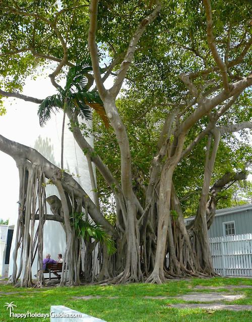 Key West Banyan Tree