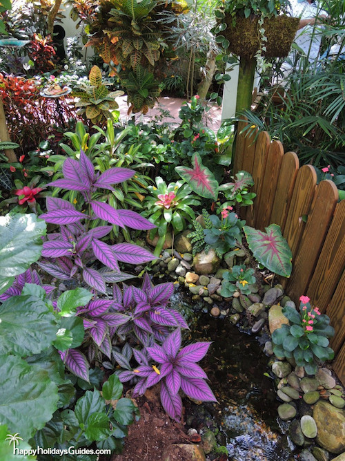 Butterfly Conservatory Coleus and Caladium