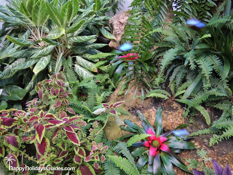 Butterfly Conservatory Plant Scene