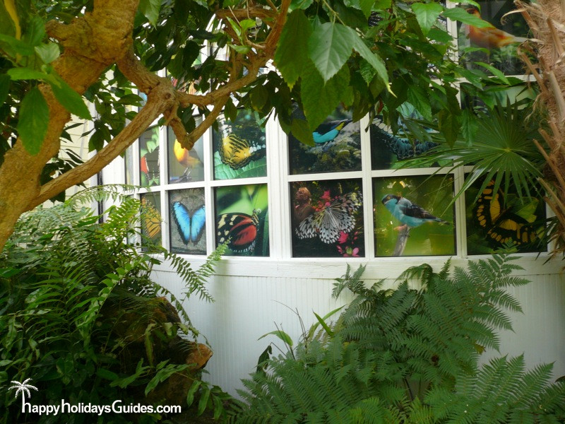 Butterfly Conservatory Windows