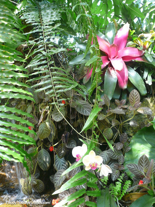 Butterfly Conservatory Bromeliad Ferns