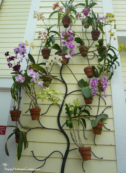 Butterfly Conservatory Flora11