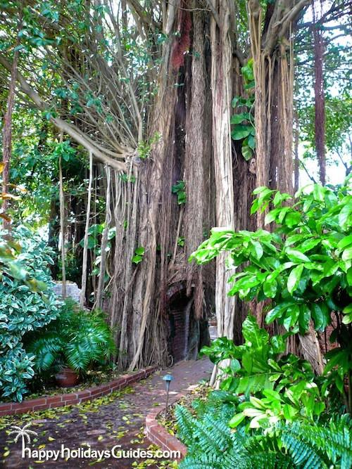 Key West Garden Club Tree