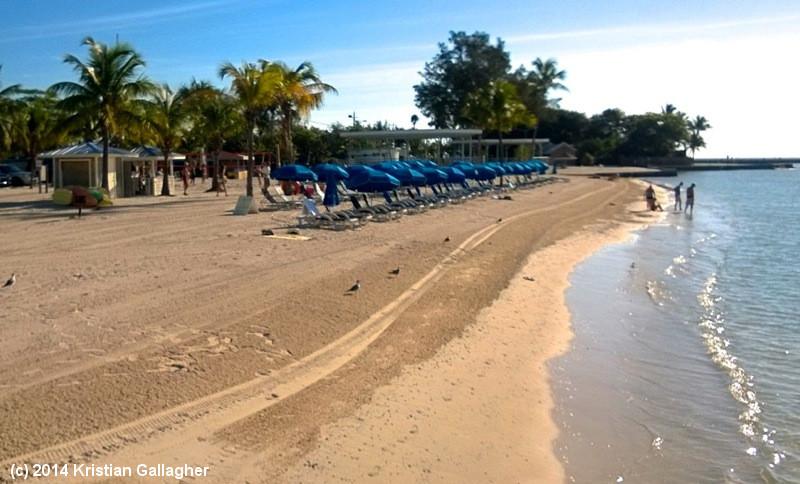Higgs Beach Umbrellas