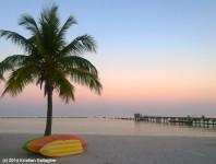 Higgs Beach Palm