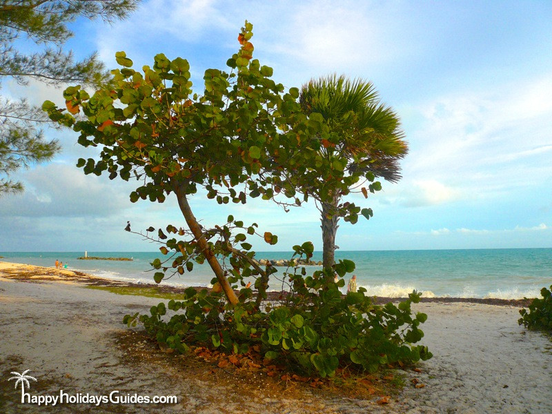 fort zachary taylor historic state park trees