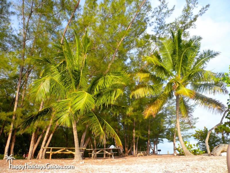 fort zachary taylor historic state park palms