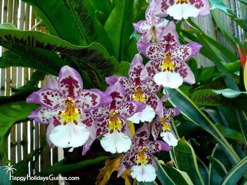 Biltmore Estate Greenhouse Orchids