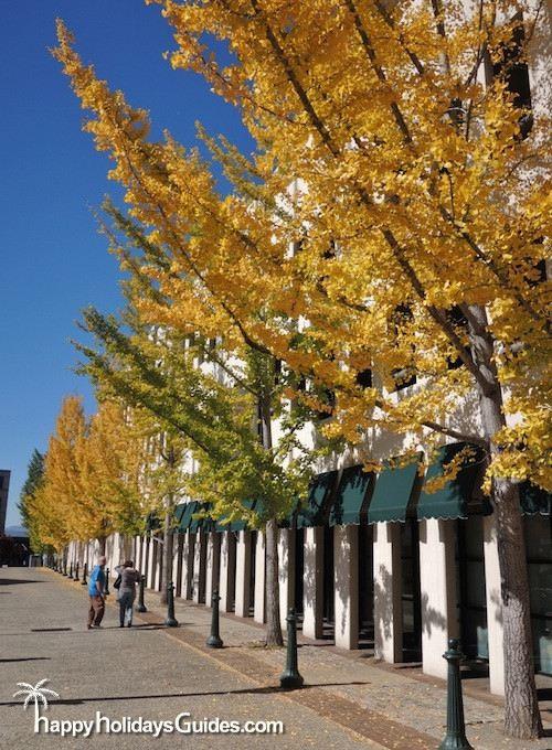 Downtown Asheville Street