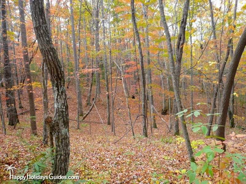 DuPont State Park Scenery