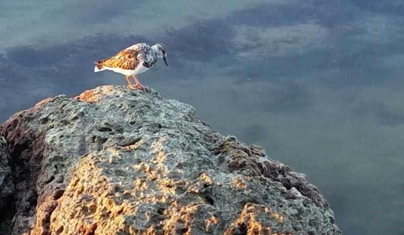 Key West Bird