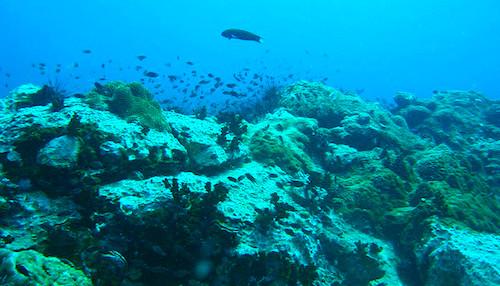 Koh Samui Scuba Diving