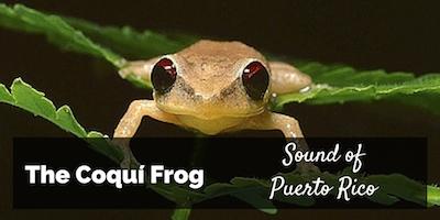 Coqui Frog Sound of Puerto Rico